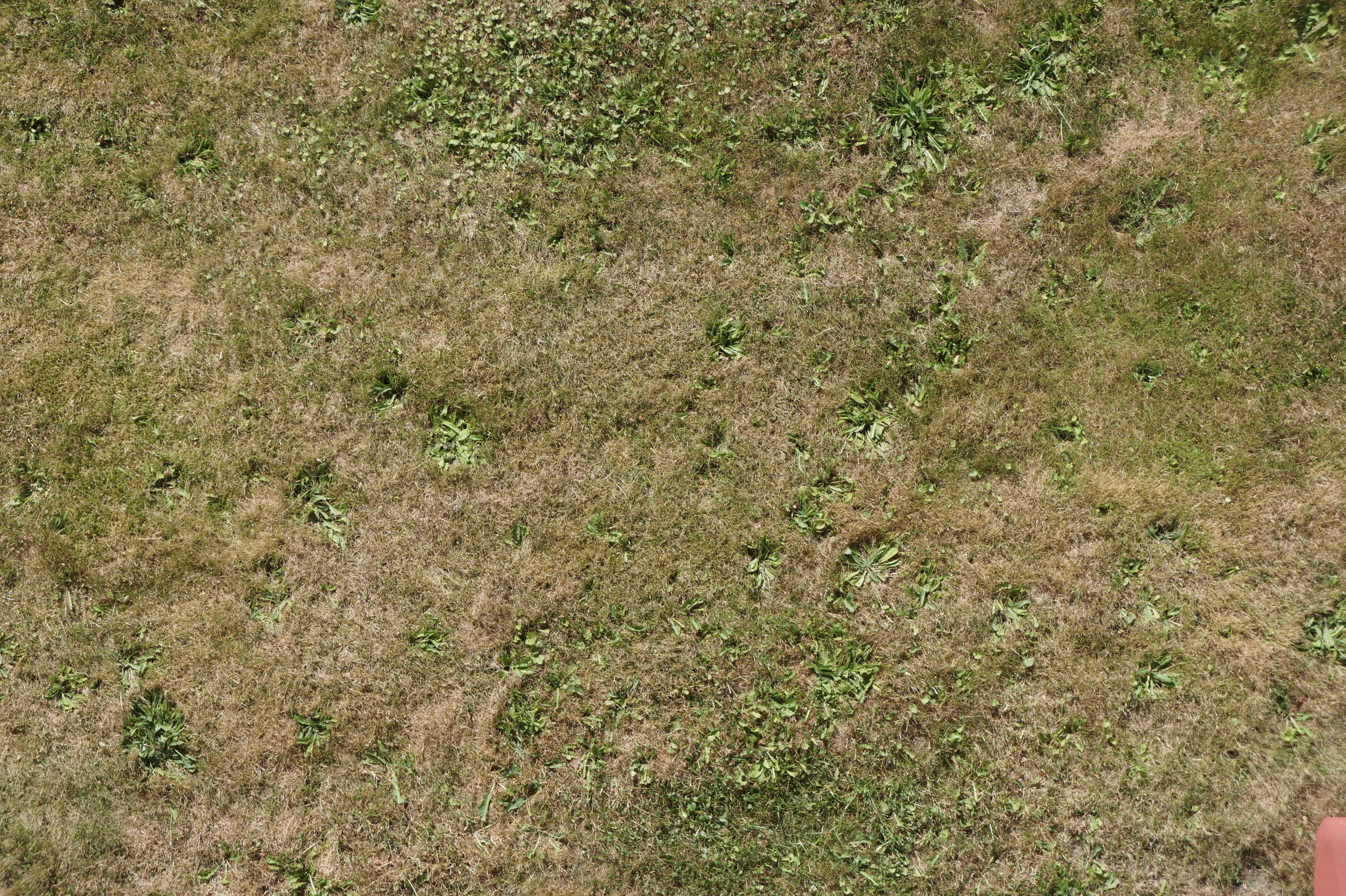 ground grass grass2